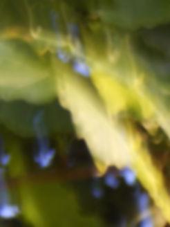 wobbly leaf.jpg