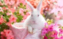 Spring-Bunny-HD-Wallpaper.jpg