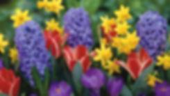 6848726-spring-flowers.jpg