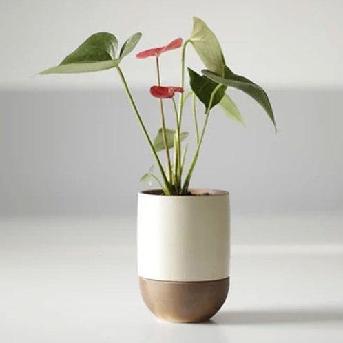 GrowLove with Flamingo Flower