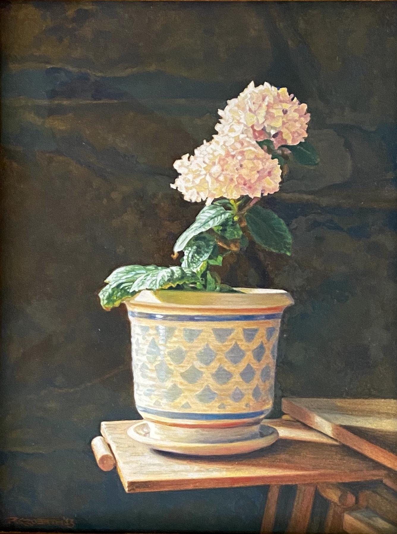 Hydrangea in Pot