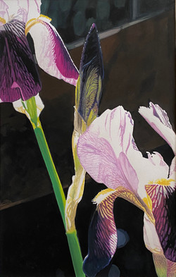 The Bearded Iris