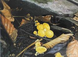 Chanterelle Cluster