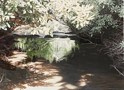 Deep in Alexander Falls