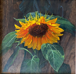Bowing Sunflower