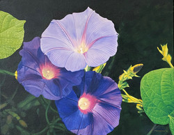 Morning Glories IV