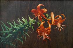 Turk Head Lilies