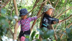 幼児期にこそ自然体験をさせたい4つの理由と大人のかかわり方