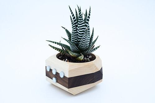 Magnetic Geometric Cactus & Succulent Planter