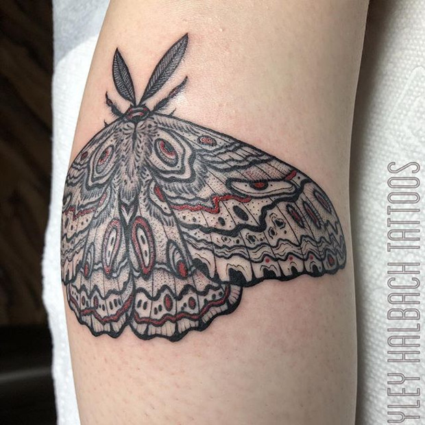 Moth Tattoo by Hayley