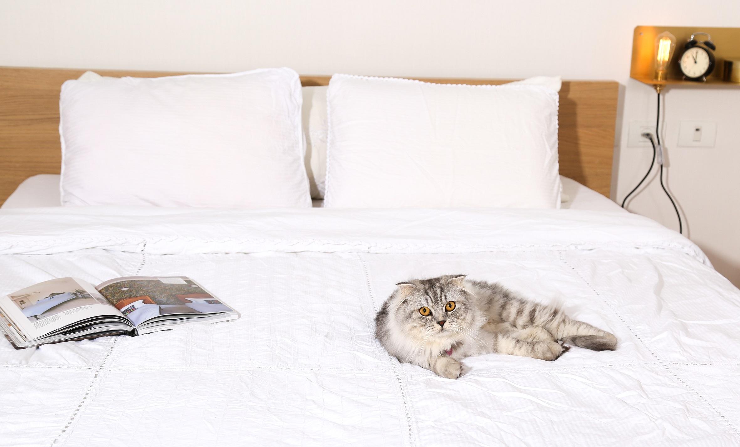 חדר שינה הורים -  2