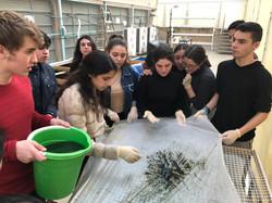 Students washing Spirulina