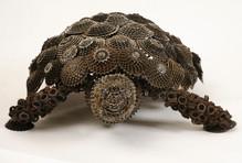 Race Turtle