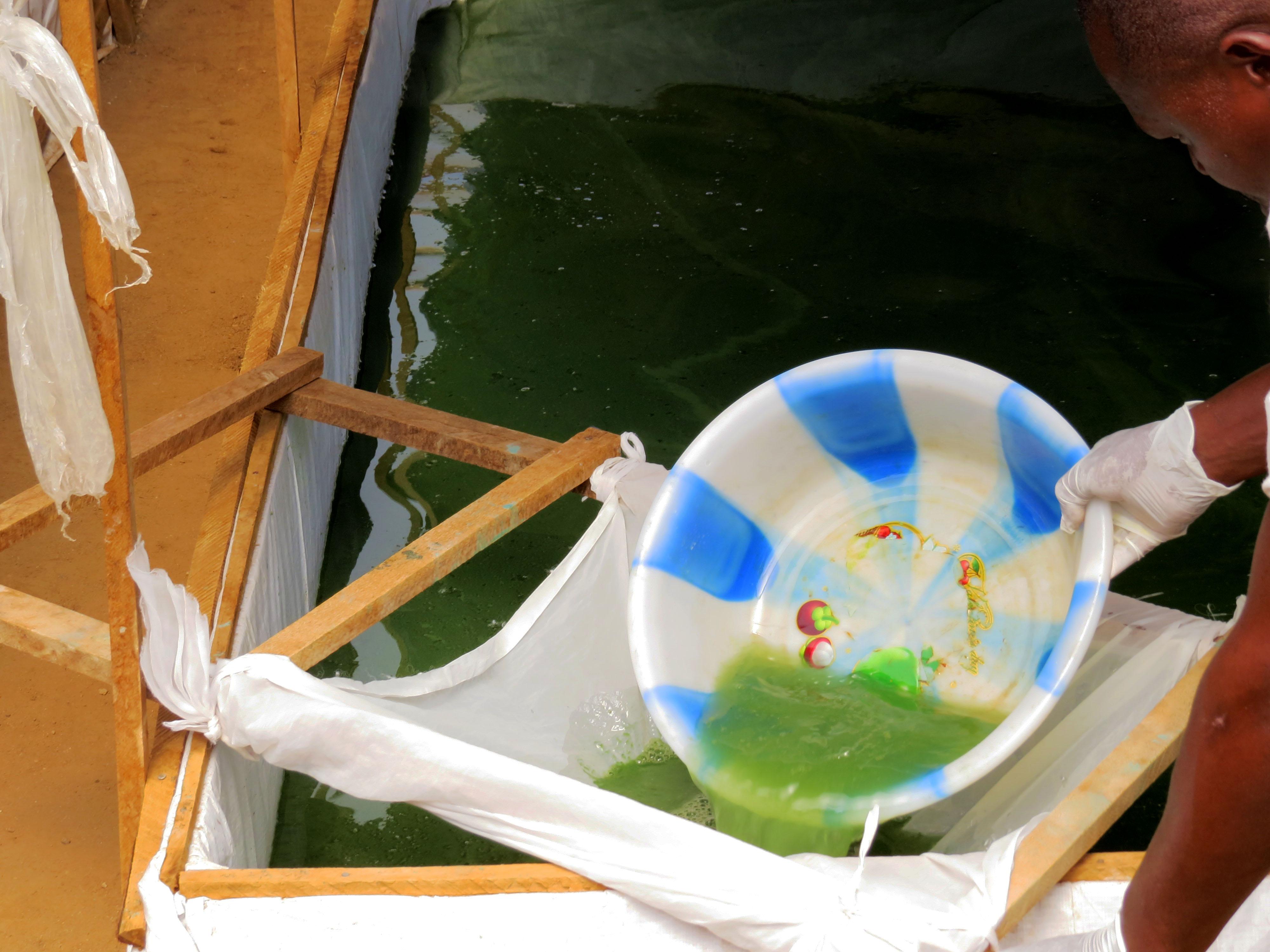 Spirulina Harvest 2