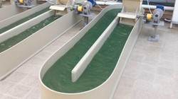 Automated Spirulina pools