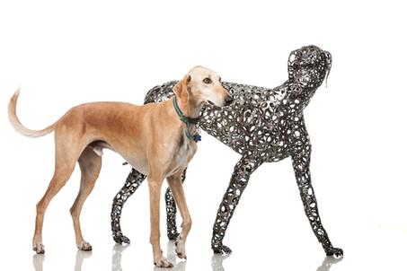 צילומים עם כלבים חיים