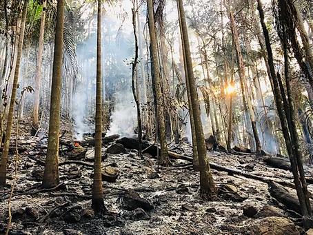 Ecosia: Reforest Now- Location Recording