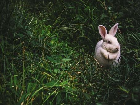 White Rabbit- Location Recording