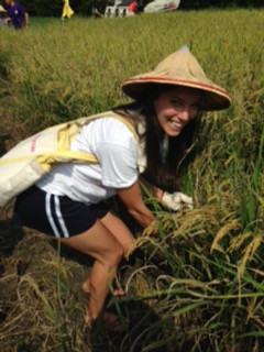 Harvesting Rice Taiwan