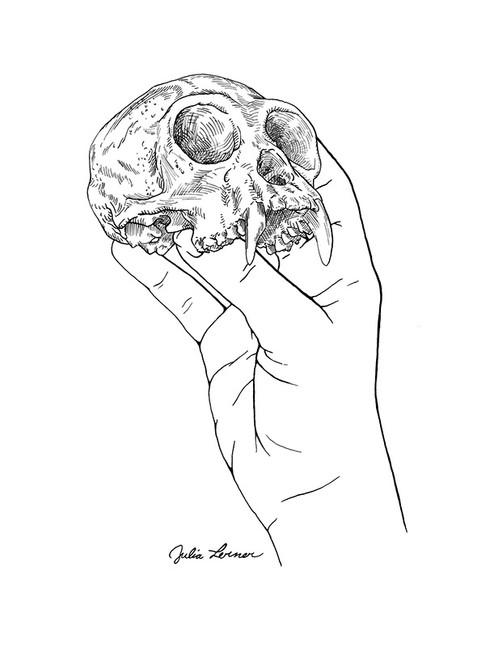 Gibbon skull