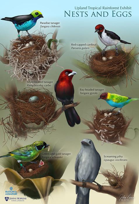 Nest & Edd Identification Key