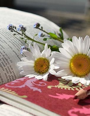 daisies-676368_640.jpg