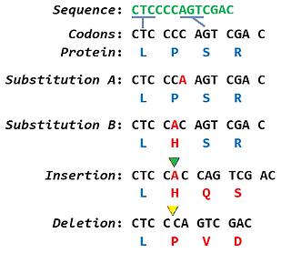 03_mutation.png