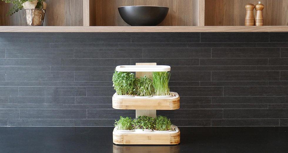 novago-indoor-garden-microgreen