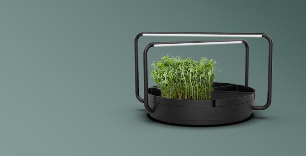 Microgreens-garden-thibault-lerailler-to