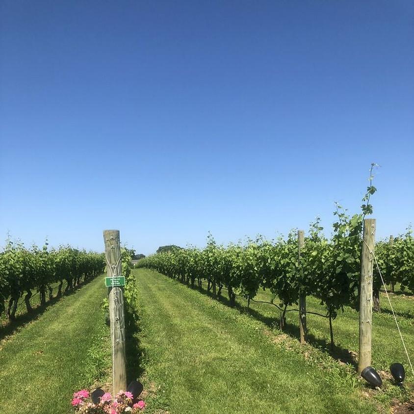 ZENfandel Retreat - Yoga and Wine Tasting (1)