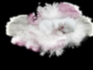 BKH von der weißen Wolke