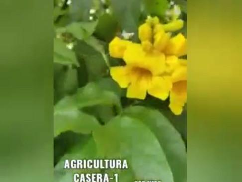 Quieres Favorecer Tu Alimentación La Agricultura Casera Te Lo Permite