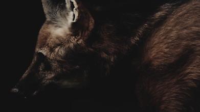 Fur Good.png