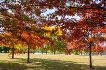 Autumn Leaves Zen.jpg