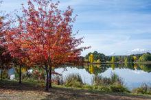 Autumn Leaves Lake Zen.jpg