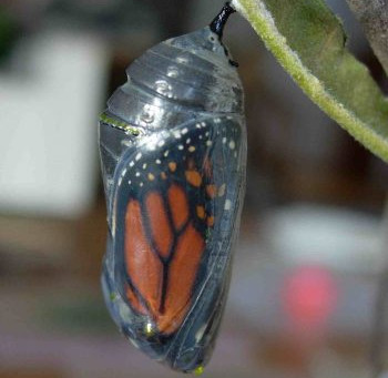 When it is time to change and grow - Metamorphosis
