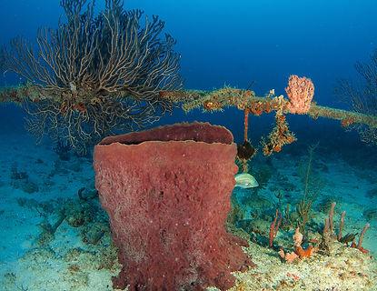 Undersea Cable Maintenance