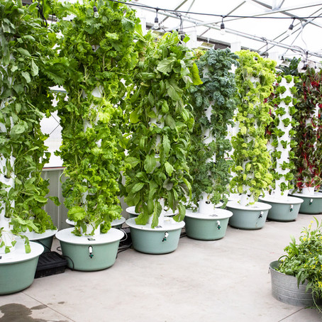 Aeroponics - our experience growing vertically