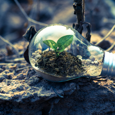 6 Tips to Go Green
