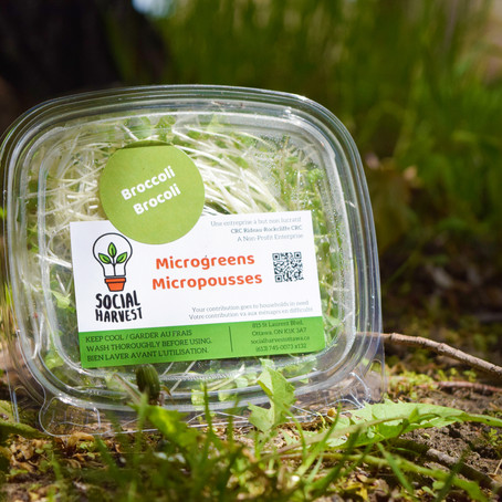 The Difference Microgreens Make
