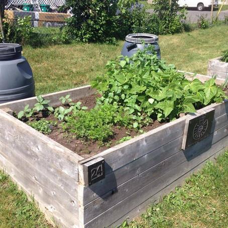 Community Gardens - Spring 2021