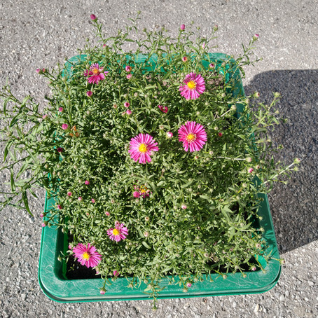 Flowers & Food: A beautification project at the Rideau-Rockcliffe Community Resource Centre