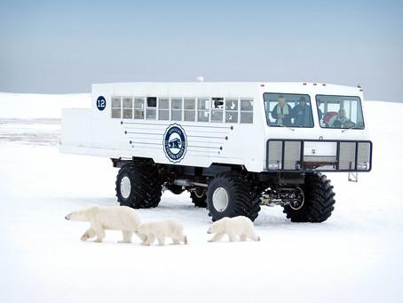 Pressemeldung: Umweltfreundliche Eisbärenbeobachtung im E-Tundra Buggy von Frontiers North Adventure