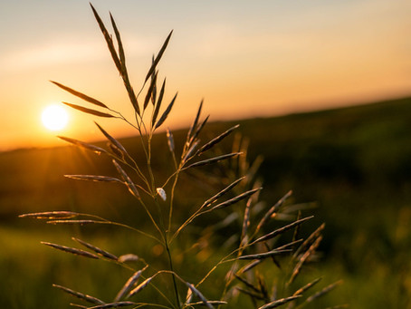 Die schönsten Orte für einen Bilderbuch-Sonnenuntergang in Manitoba