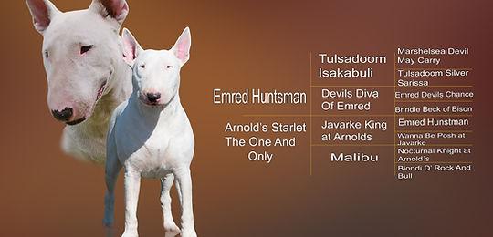 TEEZILY Body B/éb/é Bull Terrier