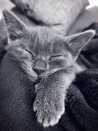 cat-3971068.jpg