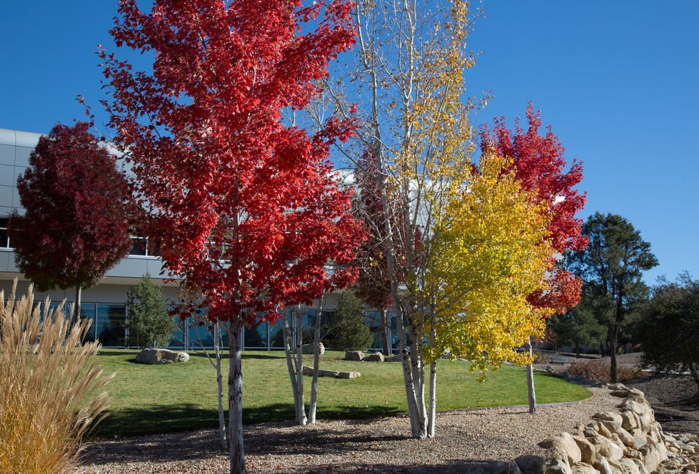 fall--4.jpg