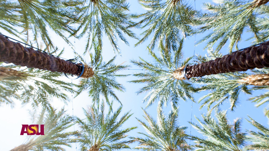 ASU Palms.jpg