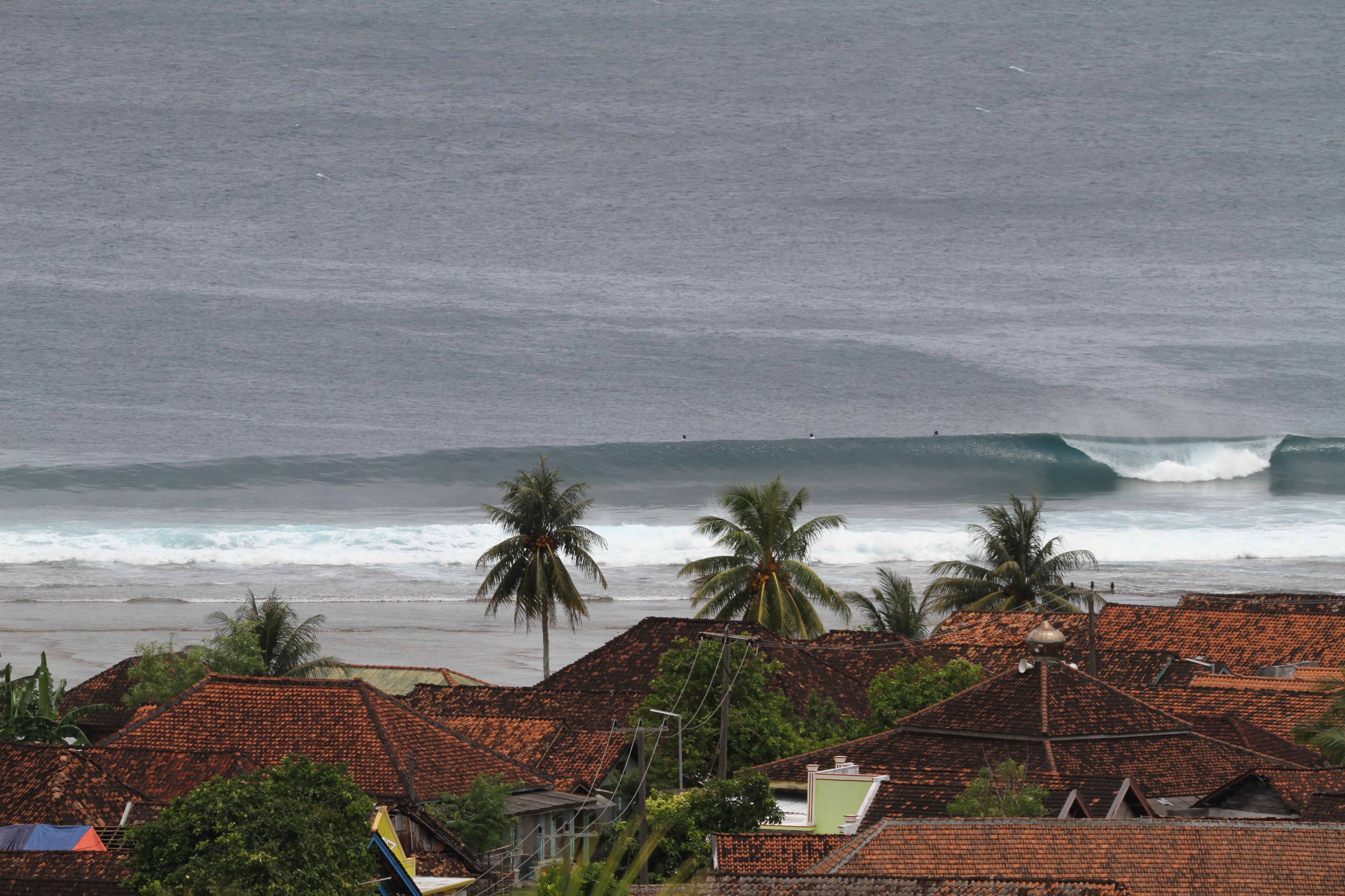 Jennys Right Sumatra