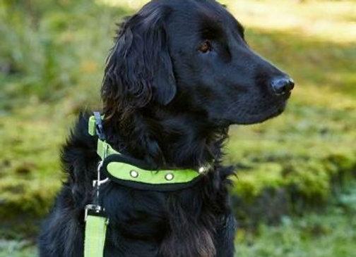 Woofmasta Hi Viz Flashing Dog Collar
